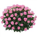 Корзины из роз - цветы и букеты на roza.pl.ua