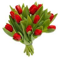 Букет из 13 тюльпанов - цветы и букеты на roza.pl.ua
