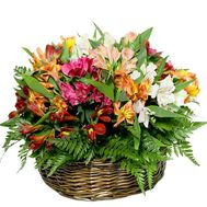 Basket of alstromeries - flowers and bouquets on roza.pl.ua