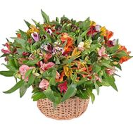 Multicolored basket of alstroemerias - flowers and bouquets on roza.pl.ua