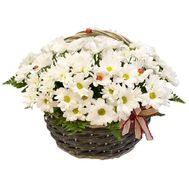 Chamomile in the basket - flowers and bouquets on roza.pl.ua