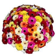 Bouquet of 101 gerberas - flowers and bouquets on roza.pl.ua