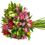 Букет из 23 альстромерий - цветы и букеты на roza.pl.ua