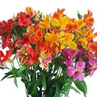 Букет из 17 альстромерий - цветы и букеты на roza.pl.ua