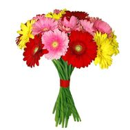 Bouquet of 17 gerberas - flowers and bouquets on roza.pl.ua