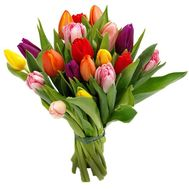 Bouquet of 19 Tulips - flowers and bouquets on roza.pl.ua