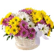 Cart 11 chrysanthemums - flowers and bouquets on roza.pl.ua