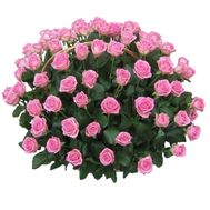 Basket of 121 pink roses - flowers and bouquets on roza.pl.ua