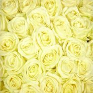 White roses per piece - flowers and bouquets on roza.pl.ua