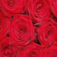 Red roses per piece - flowers and bouquets on roza.pl.ua