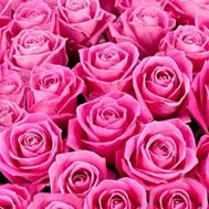 Pink roses per piece - flowers and bouquets on roza.pl.ua