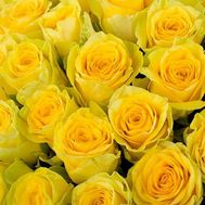 Yellow roses per piece - flowers and bouquets on roza.pl.ua