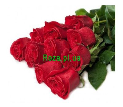 """11 meter long roses"" in the online flower shop roza.pl.ua"