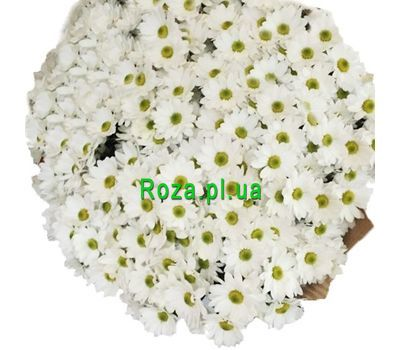 """""""51 chamomile chrysanthemum in bouquet"""" in the online flower shop roza.pl.ua"""