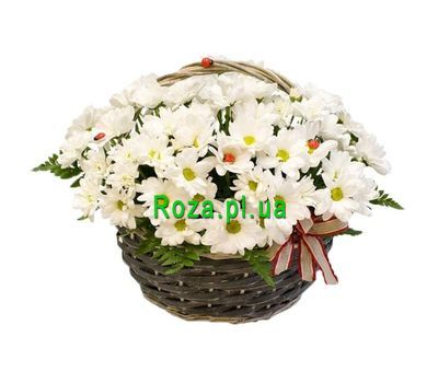 """""""Chamomile in the basket"""" in the online flower shop roza.pl.ua"""
