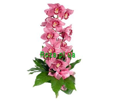 """Branch of Orchid"" in the online flower shop roza.pl.ua"
