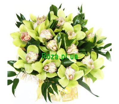 """Bouquet of 13 orchids"" in the online flower shop roza.pl.ua"