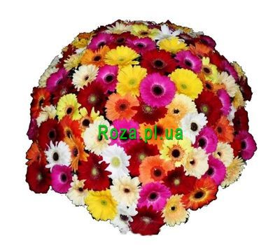 """Bouquet of 101 gerberas"" in the online flower shop roza.pl.ua"