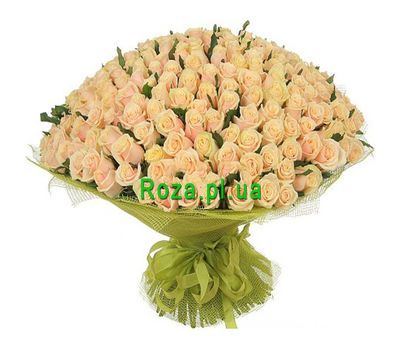 """VIP bouquet of 201 cream-colored roses"" in the online flower shop roza.pl.ua"