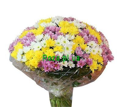 """Bouquet of 51 multi-colored chrysanthemums"" in the online flower shop roza.pl.ua"