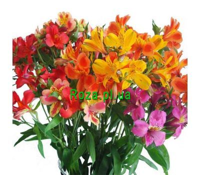 """Bouquet of 17 alstromeries"" in the online flower shop roza.pl.ua"