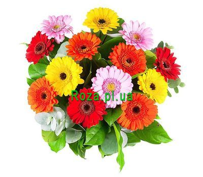 """Bouquet of 15 gerberas"" in the online flower shop roza.pl.ua"