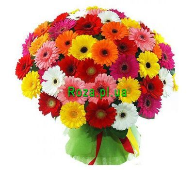 """Bouquet of 51 gerberas"" in the online flower shop roza.pl.ua"