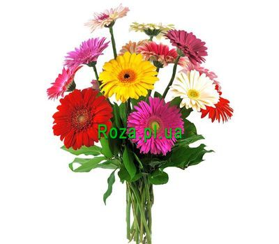 """Bouquet of 11 gerberas"" in the online flower shop roza.pl.ua"