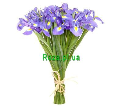 """Bouquet of 25 irises"" in the online flower shop roza.pl.ua"