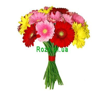 """Bouquet of 17 gerberas"" in the online flower shop roza.pl.ua"