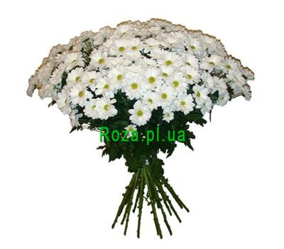"""""""Bouquet of 19 chamomiles"""" in the online flower shop roza.pl.ua"""