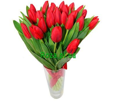 """""""Bouquet of 25 Tulips"""" in the online flower shop roza.pl.ua"""