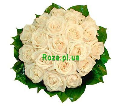 """Bouquet of 19 Cream Roses"" in the online flower shop roza.pl.ua"