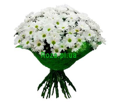 """Bouquet of 17 chamomiles"" in the online flower shop roza.pl.ua"