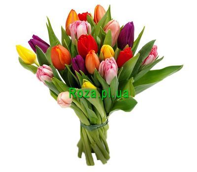 """Bouquet of 19 Tulips"" in the online flower shop roza.pl.ua"