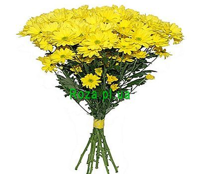 """Bouquet of 9 yellow chrysanthemums"" in the online flower shop roza.pl.ua"