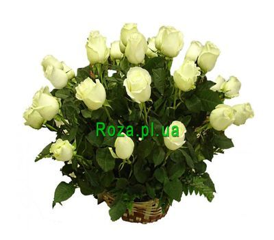 """A basket of 21 white roses"" in the online flower shop roza.pl.ua"