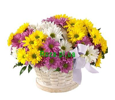"""Cart 11 chrysanthemums"" in the online flower shop roza.pl.ua"