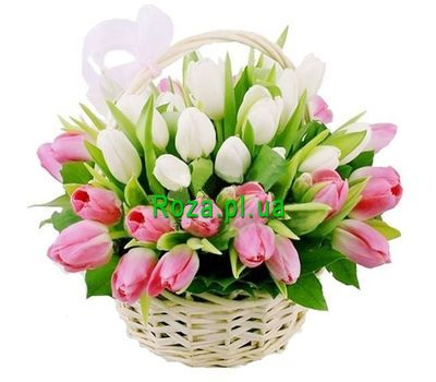 """Basket of 39 white and pink tulips"" in the online flower shop roza.pl.ua"