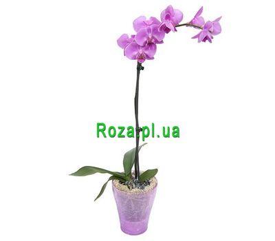 """Орхідея рожева"" в интернет-магазине цветов roza.pl.ua"