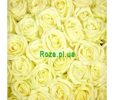 """White roses per piece"" in the online flower shop roza.pl.ua"