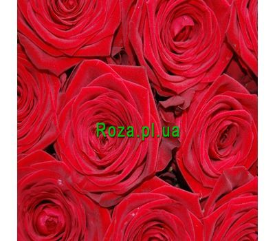 """Red roses per piece"" in the online flower shop roza.pl.ua"