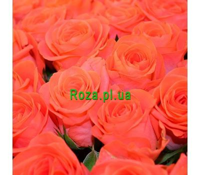 """Orange roses by the piece"" in the online flower shop roza.pl.ua"